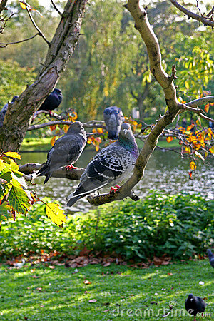 Free Doves On A Limb Stock Photos - 1459283