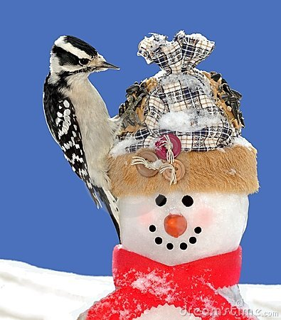 Downy Woodpecker and Snowman