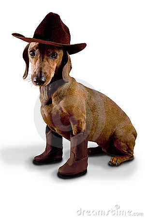 Doxie dog wearing cowboy hat and boots