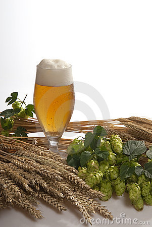 Draft beer with hops