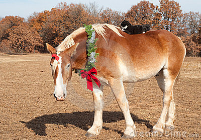Draft horse wearing a Christmas wreath