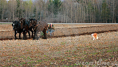 Draft Horses Royalty Free Stock Photography - Image: 14046607