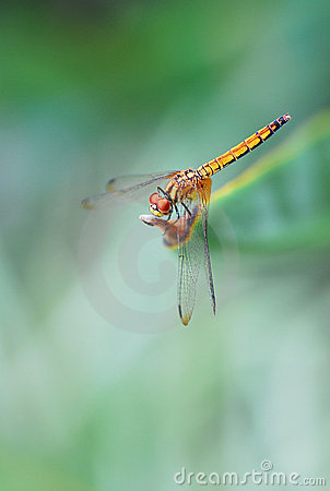 Dragon fly at the gardens