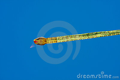 Dragon Kite against Clear Blue Sky