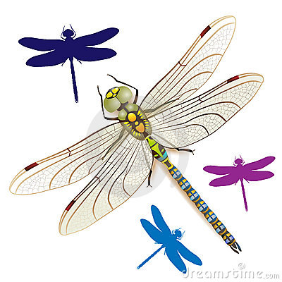 Free Dragonfly Stock Image - 20329781