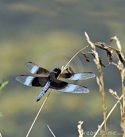 Free Dragonfly Stock Photography - 3040472