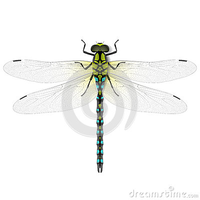 Free Dragonfly Stock Image - 33229581
