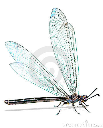 Free Dragonfly Royalty Free Stock Image - 3962446
