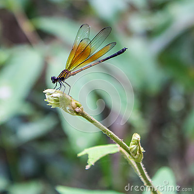 Free Dragonfly Royalty Free Stock Photo - 45502525