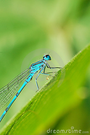 Free Dragonfly Royalty Free Stock Image - 5615706