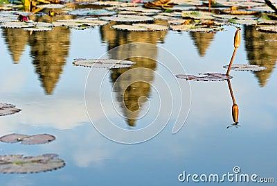 Dragonfly and Angkor Wat at sunset, Cambodia.