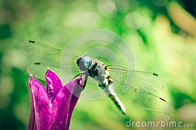 Dragonfly on bell
