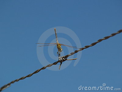 Dragonfly in equilibrium