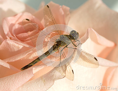 Dragonfly on flower up view closeup