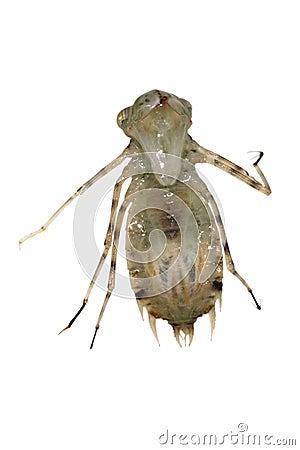 Dragonfly larva monster