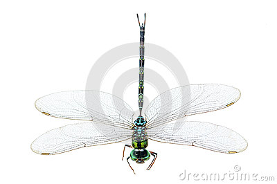 Dragonfly macro isolated