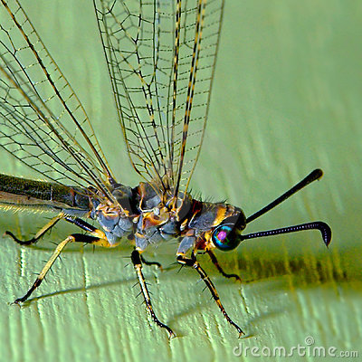 Free Dragonfly On A Wall Stock Photo - 5562920
