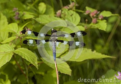 Dragonfly Resting On A Branch Stock Photos - Image: 5668453