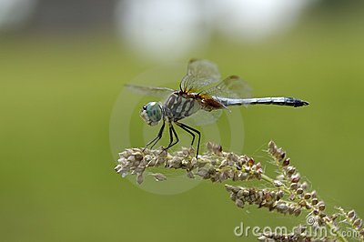 DragonFly and Seeds