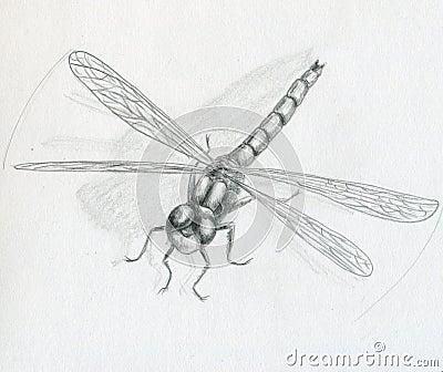 Dragonfly - sketch
