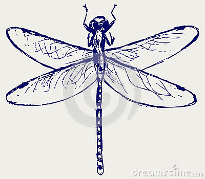 Dragonfly sketchy