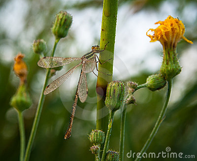 Dragonfly on stalk