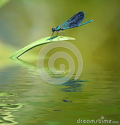 Dragonfly on stalk of grass.