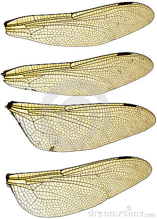 Free Dragonfly Wings Set Stock Photos - 6138463