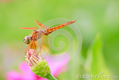 Dragonfly in wooden background