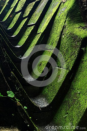 Drain with green moss