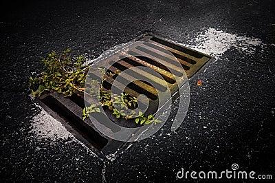Drain in road