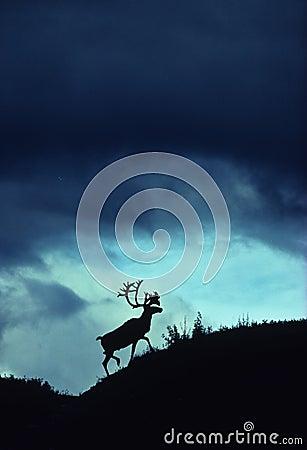 Dramatic Caribou Silhouette