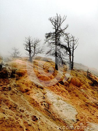 Free Dramatic Dead Trees On Rock Formation Stock Photos - 129781883