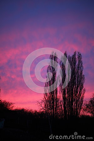 Dramatic pink sky and trees sunset or sunrise