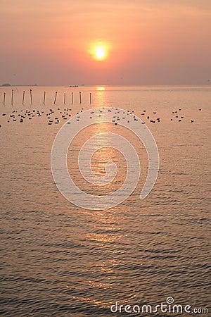 Dramatic sunrise at QM. Bangpu Recreation Center