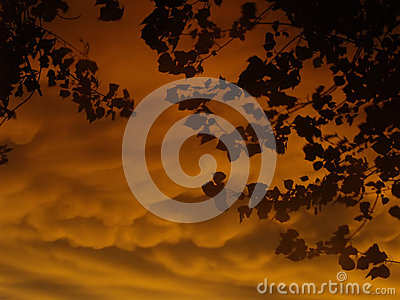 Dramatic sunset with leaves