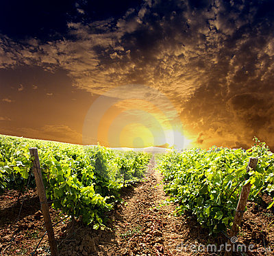 Dramatic vineyard