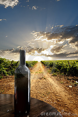 Dramatische wijngaard