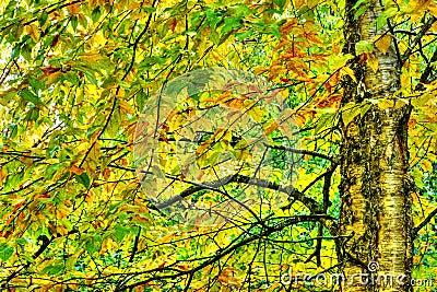 Dramatyczny hdr żółta brzoza podczas spadek