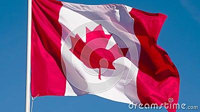 Drapeau d'état du Canada clips vidéos