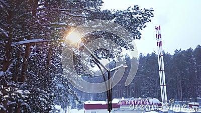 Draufsicht der Straßenlaterne auf Hintergrund des Waldes im Schnee clip Schöne Ansicht des fallenden Schnees belichtet durch Stra stock video footage