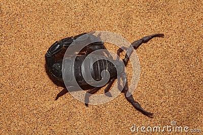 Draufsicht des Skorpions