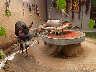 Draught donkey powering millstone