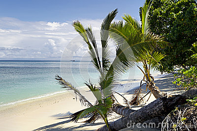 Dravuni island-palm trees on beach