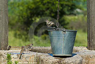 Draw-well s birds