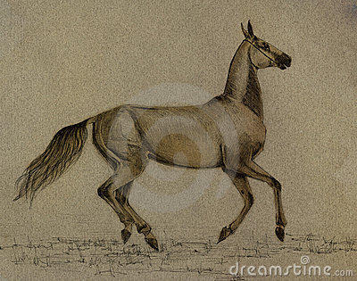 Drawing akhal-teke horse