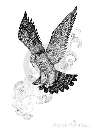 drawing attacking hawk falcon stock illustration image