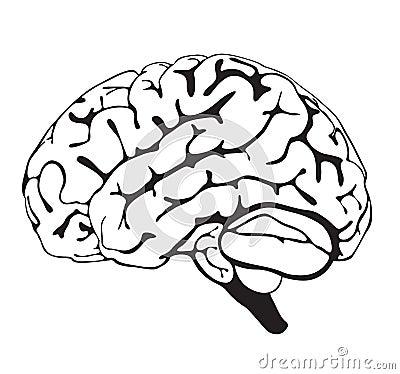 Drawing brain closeup