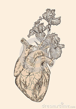 Drawing Human heart with flowers Stock Photo