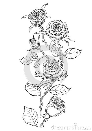 Hand Drawing Black Bunch Of RoseEach Flowers Can Regroup